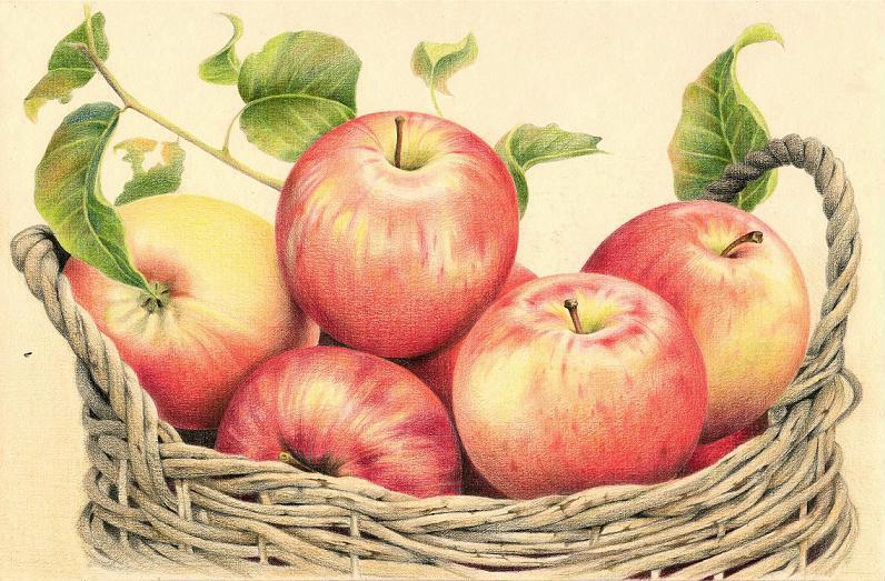 Корзина с яблочками